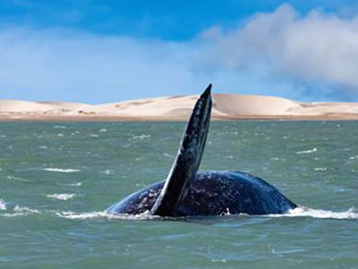 ECUADOR: Estudio científico revela que animales marinos grandes corren peligro